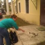 Почему Оля кормит кошек?